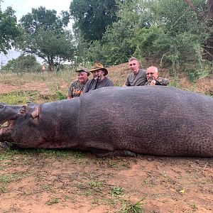 South Africa Hunting Hippo