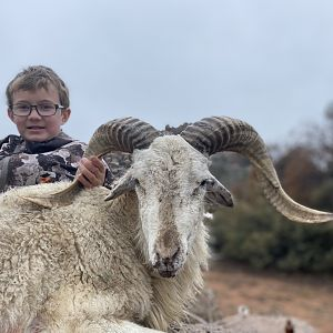 Texas USA Hunt Dall Sheep