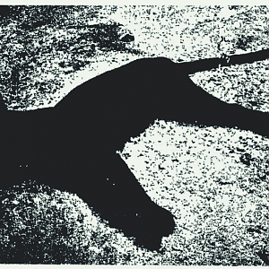 Black Panther Hunt India