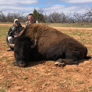 Texas USA Hunt Bison