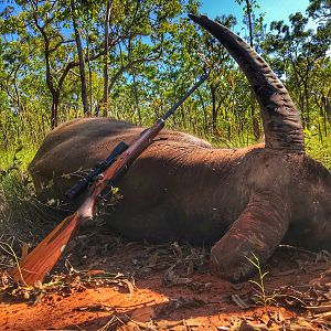Asiatic Water Buffalo Hunting Australia
