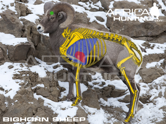 BOWHUNTING Bighorn Sheep | Hunting