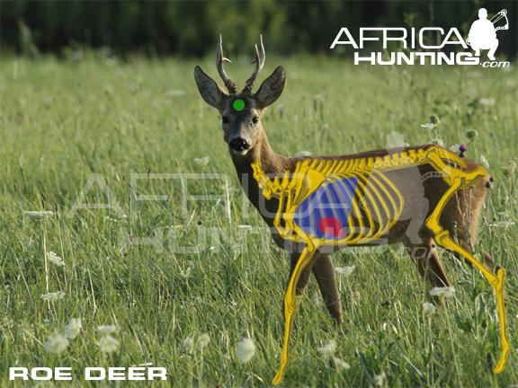 Deer Shot Placement Chart Ibovnathandedecker