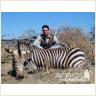 judging-zebra.jpg