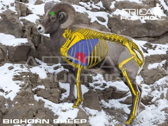 Hunting Bighorn Sheep