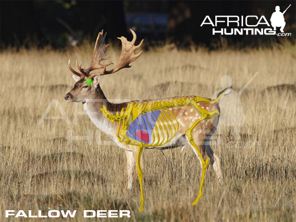 Index of huntinghunting vitals fallow deer vitals huntingg ccuart Choice Image