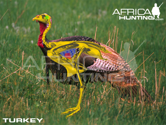 Hunting Turkey