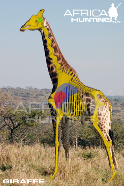 http://www.africahunting.com/hunting/shot-placement/giraffe_shot_placement.jpg