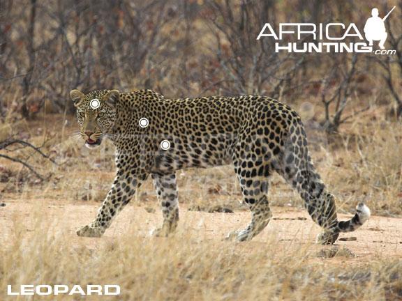 Hunting - Leopard Hunting, Predator Hunting, Leopard Hunt