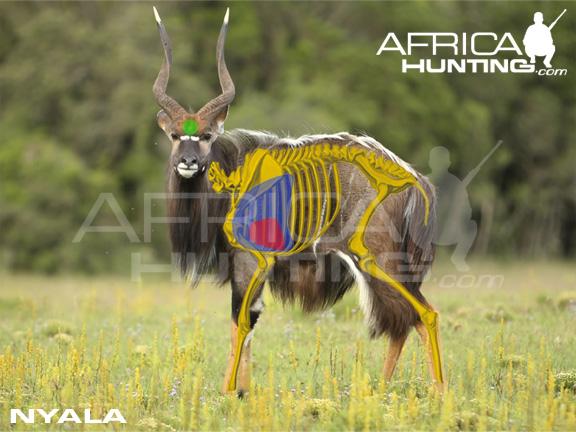 Hunting Nyala Africahunting Com