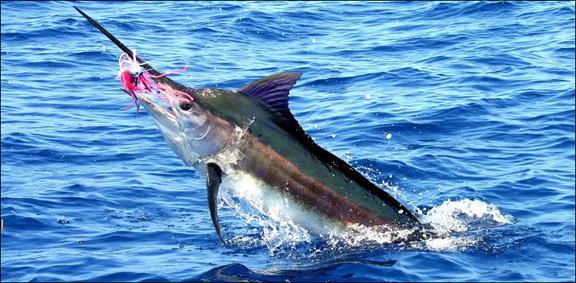 marlin-fishing-04.jpg