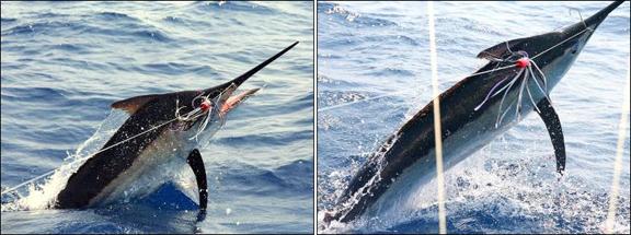 marlin-fishing-07.jpg