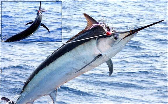 marlin-fishing-08.jpg