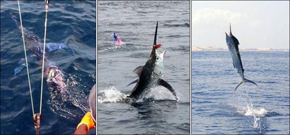 marlin-fishing-09.jpg