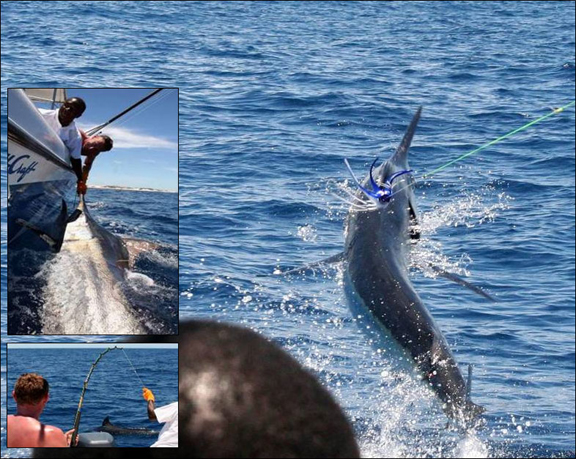 marlin-fishing-18.jpg