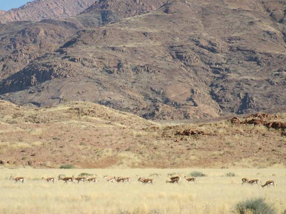 hunting-namibia-06.jpg