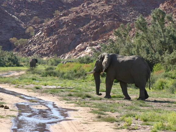 hunting-namibia-23.jpg