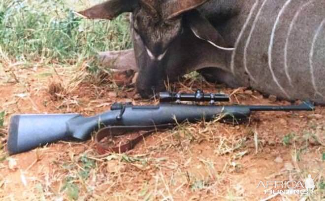 375 H&H - custom built on a VZ 24 action Rifle   Hunting