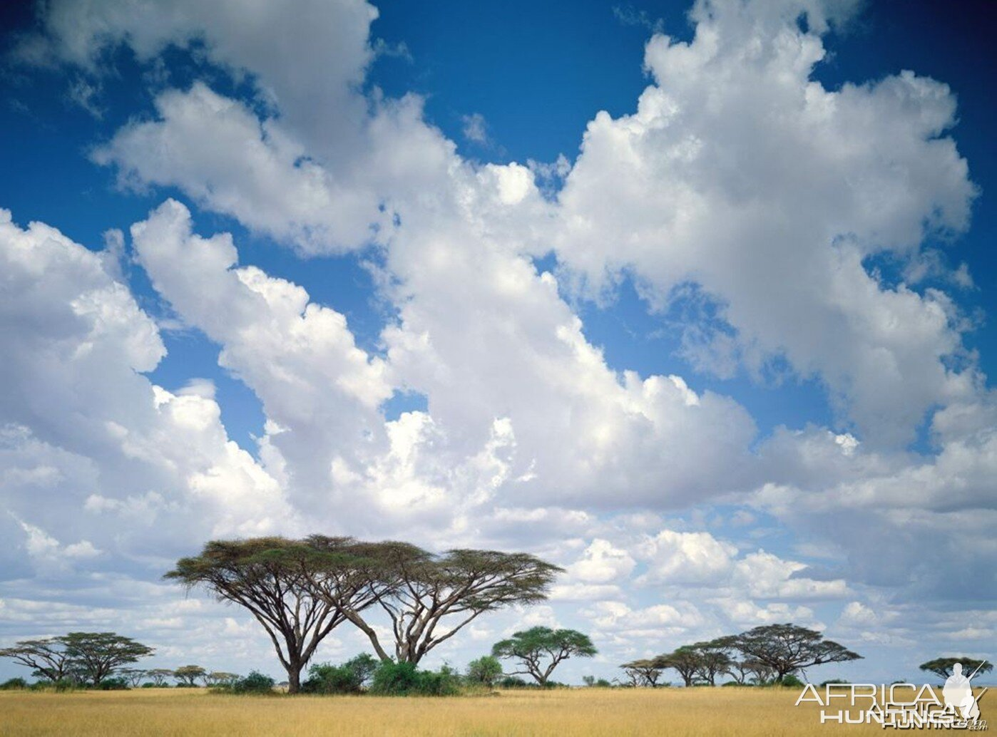 Masai Mara Game Reserve, Kenya  № 3362334  скачать