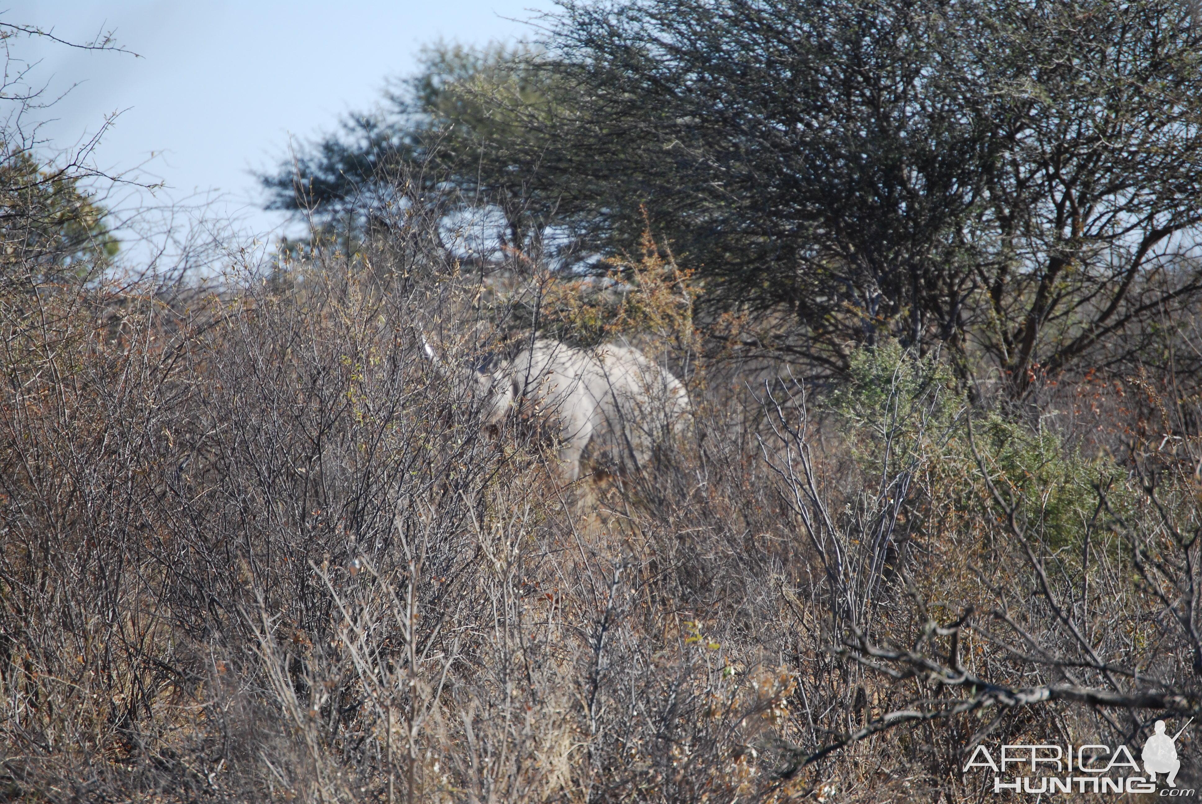 Black Rhino Namibia
