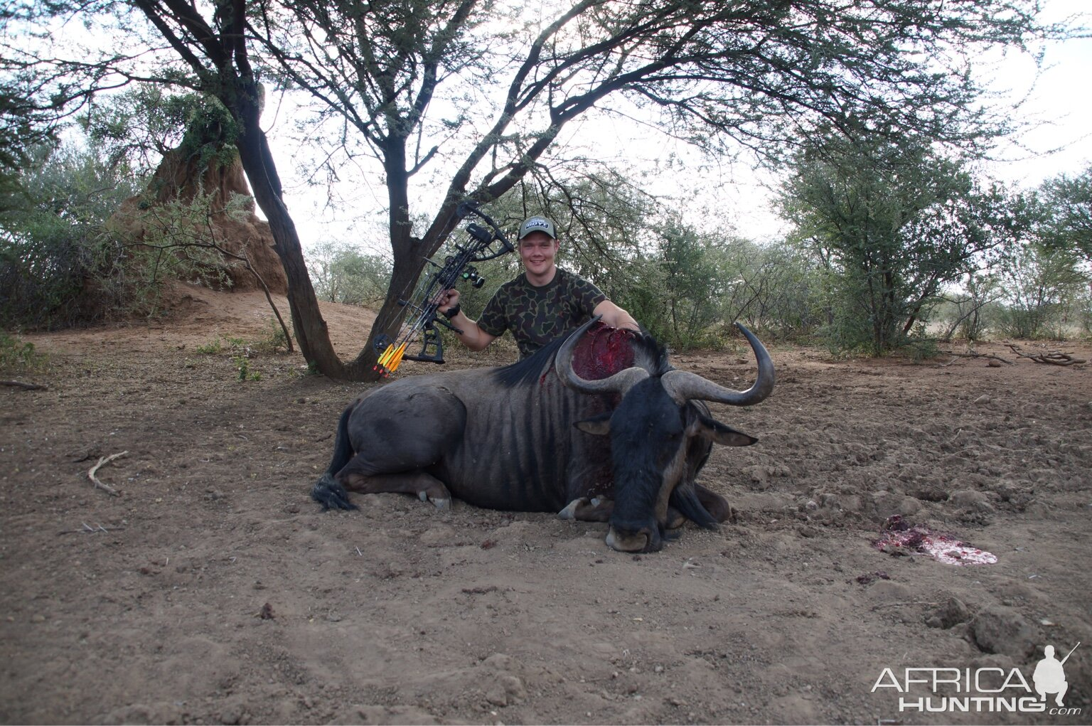 Blue Wildebeest Bow Hunting in South Africa