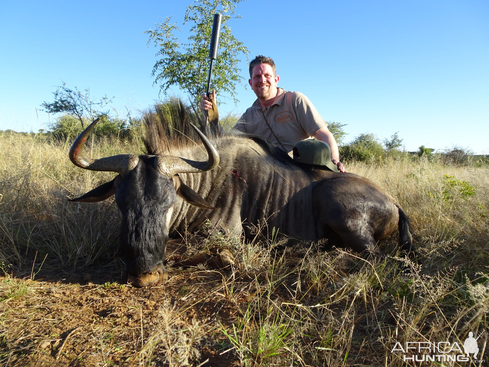 Blue Wildebeest Hunt in Namibia