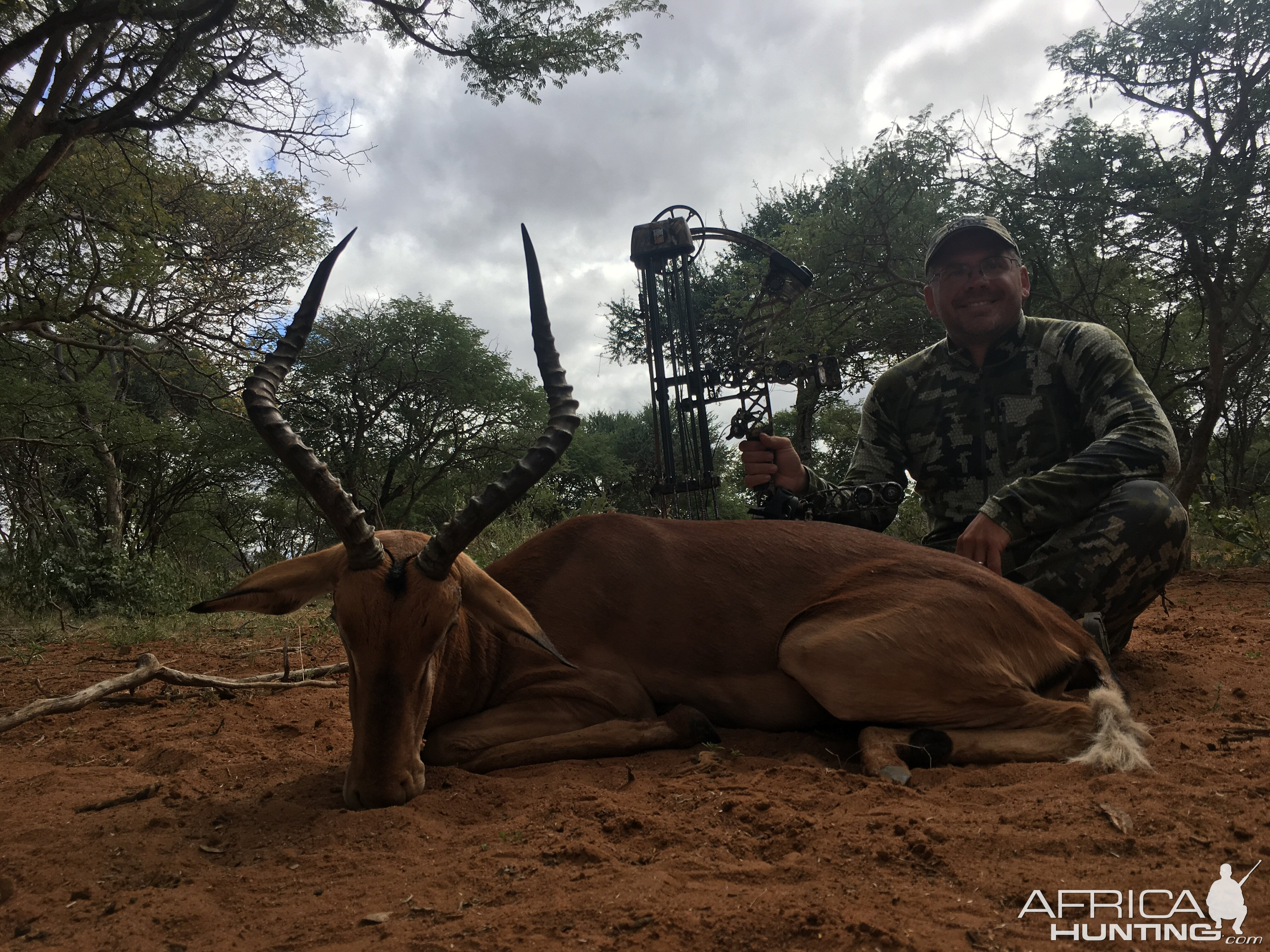 Bow Hunting Blue Wildebeest South Africa