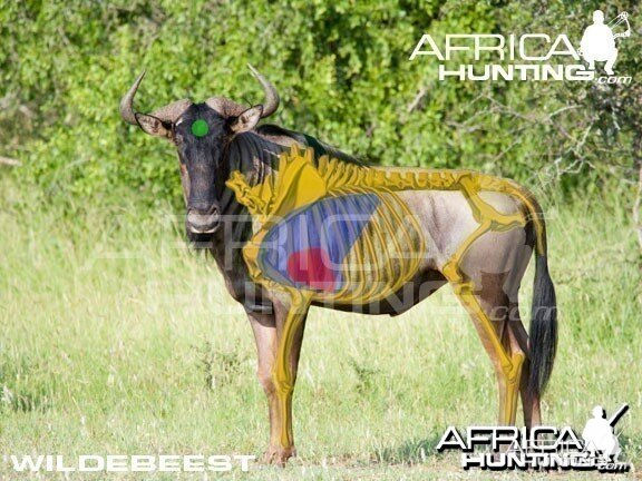 Bowhunting Wildebeest Shot Placement