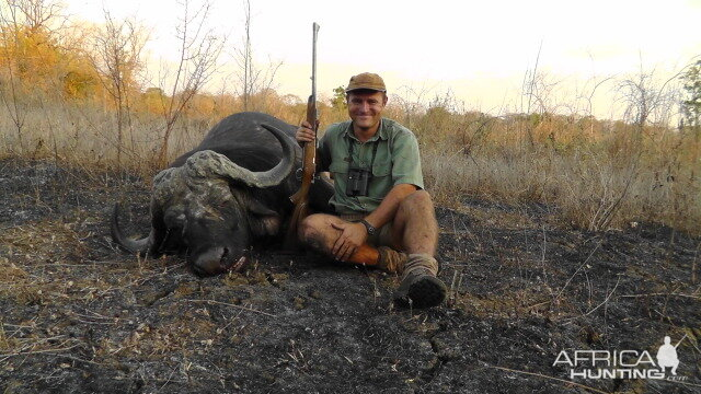 Buffalo hunted in the Niassa Reserve