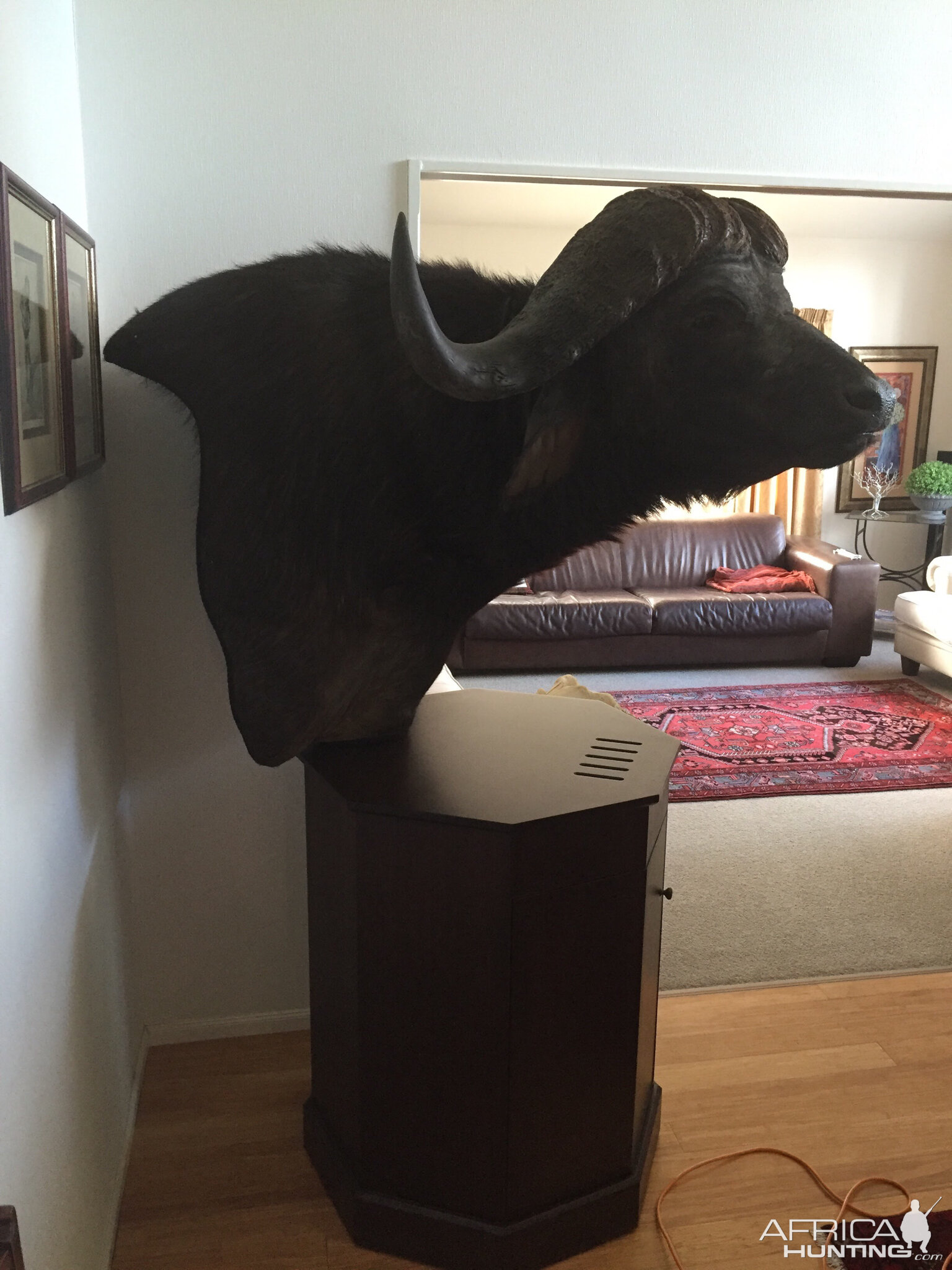 Buffalo Pedestal Taxidermy