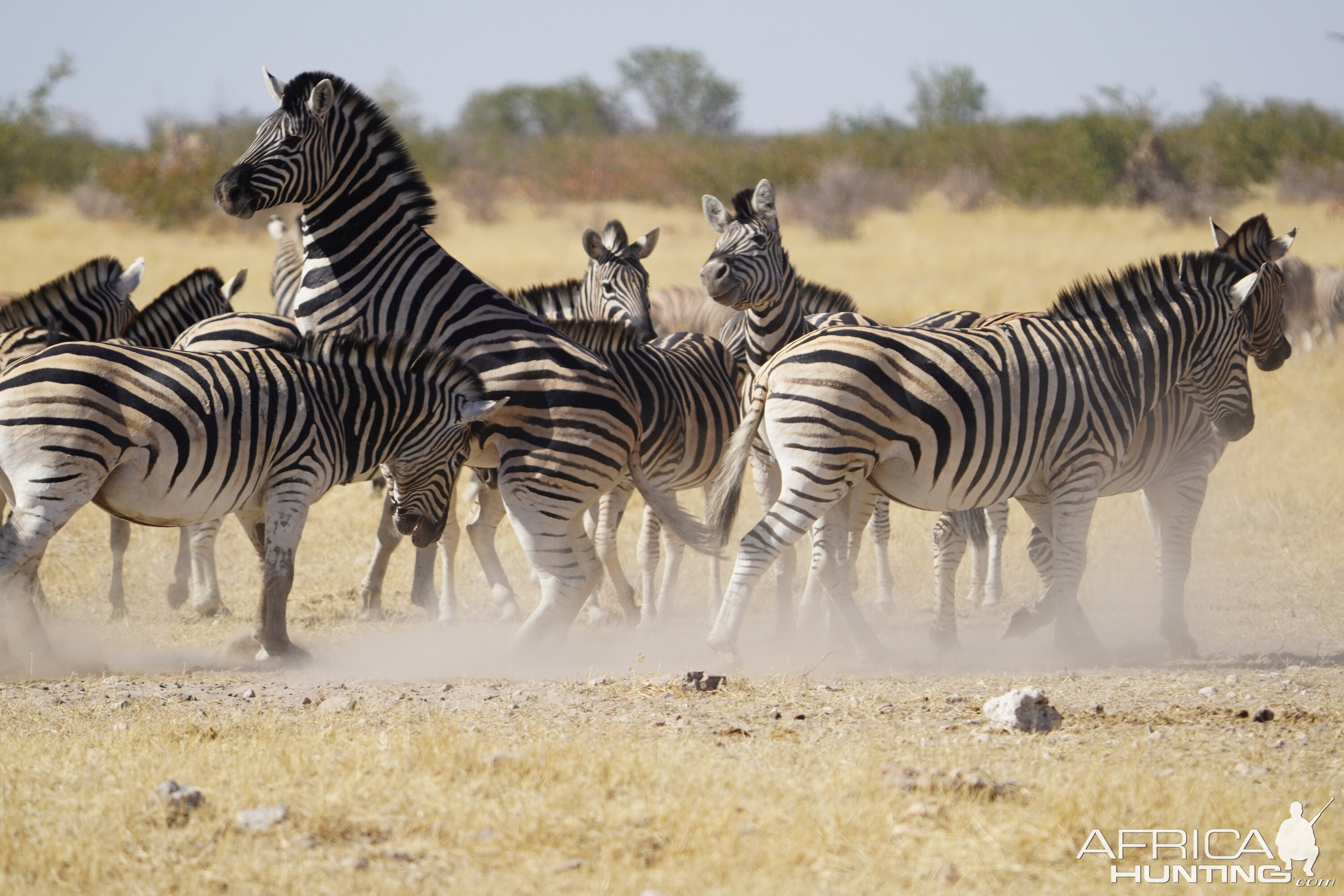 Burchell's Plain in Etosha National Park Namibia