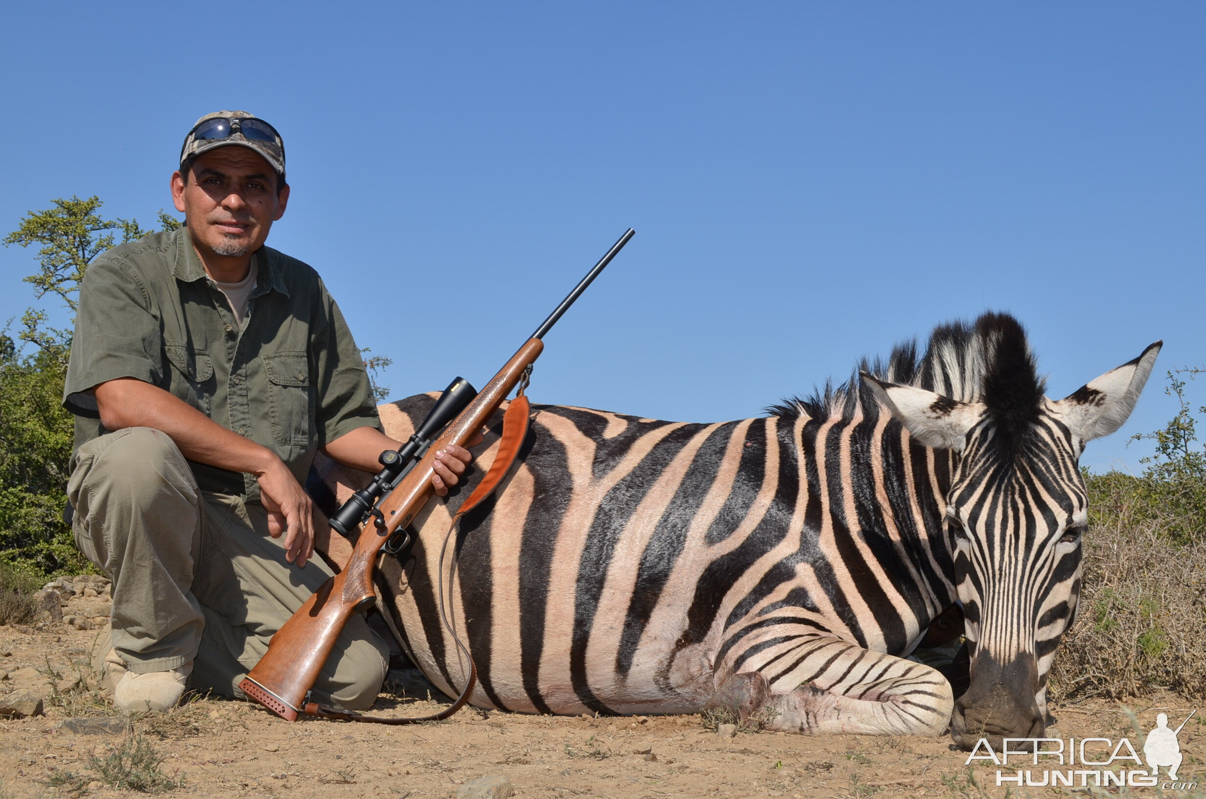 Burchell's Plain Zebra Hunt South Africa