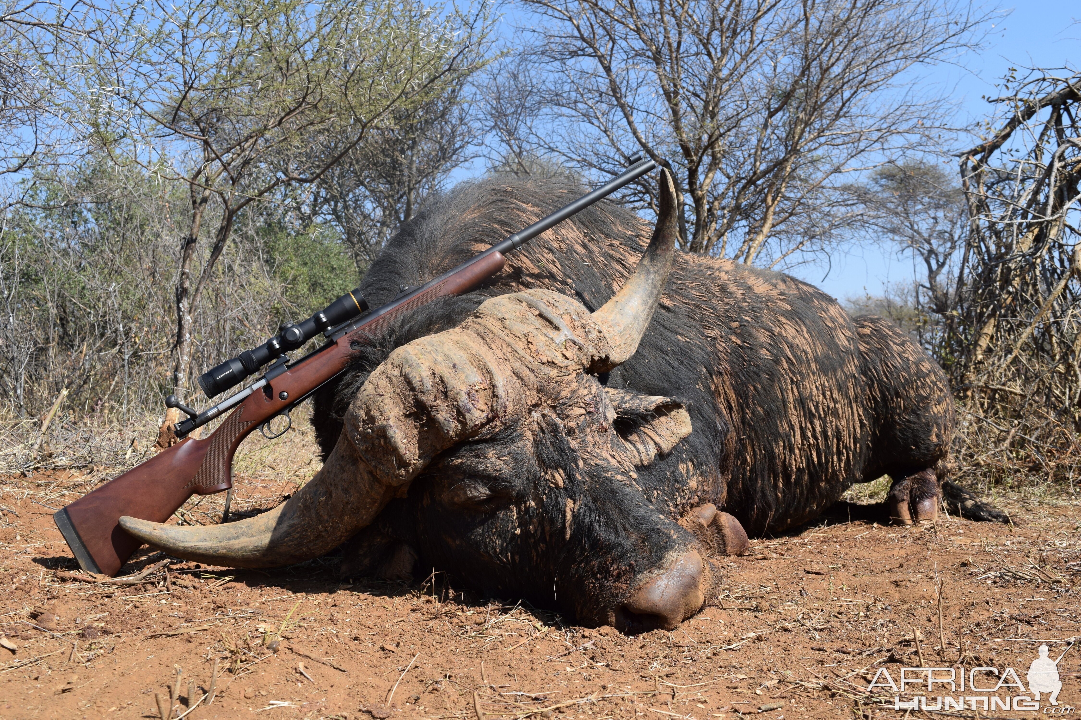 Cape Buffalo Hunting South Africa