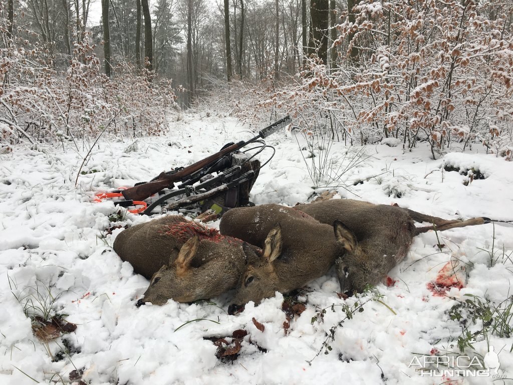 Deer Driven Hunt Germany