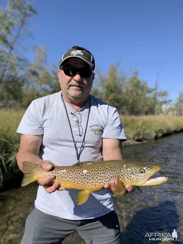 Fly Fishing Brown Trout Montana USA