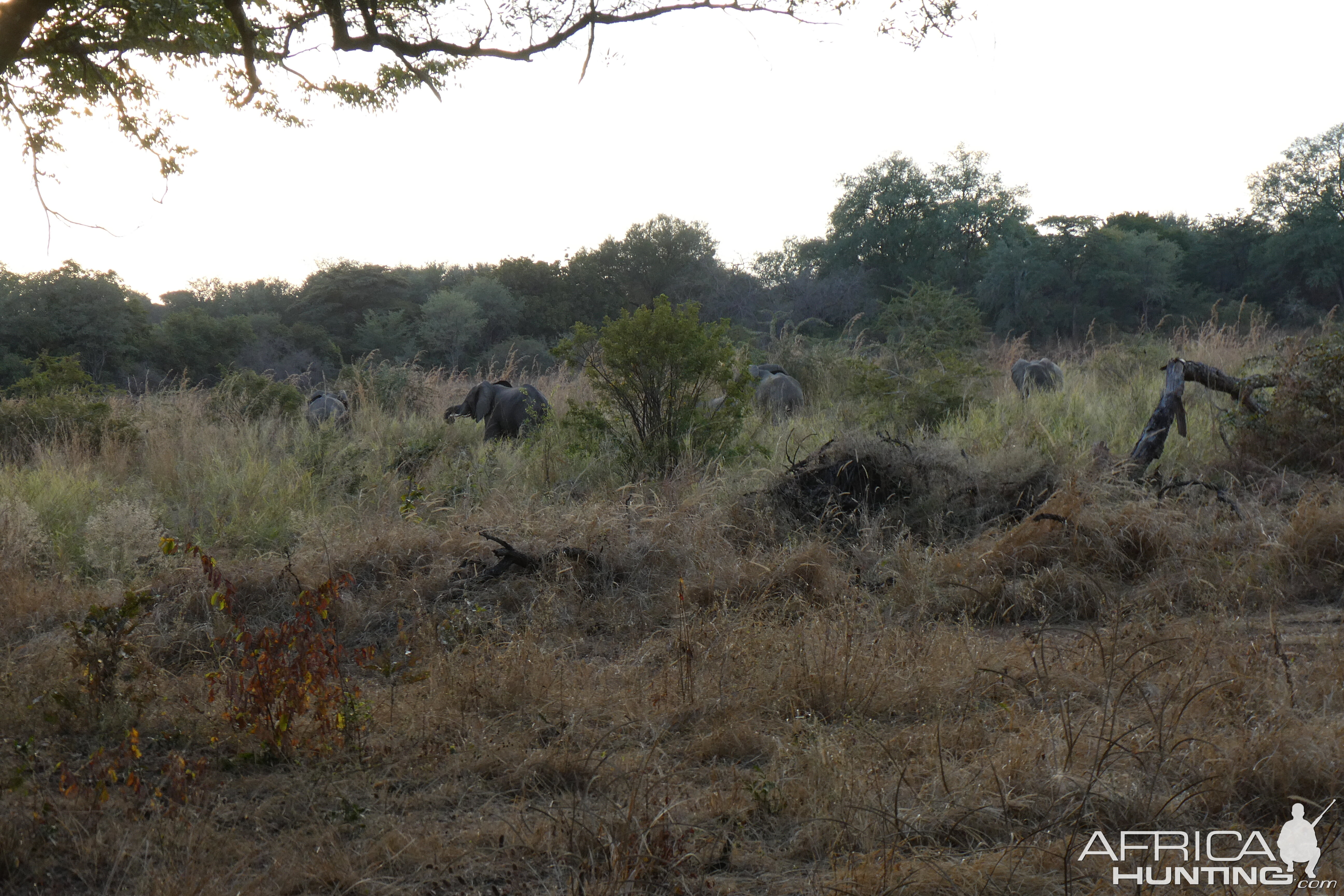 Herd of Elephants Zimbabwe