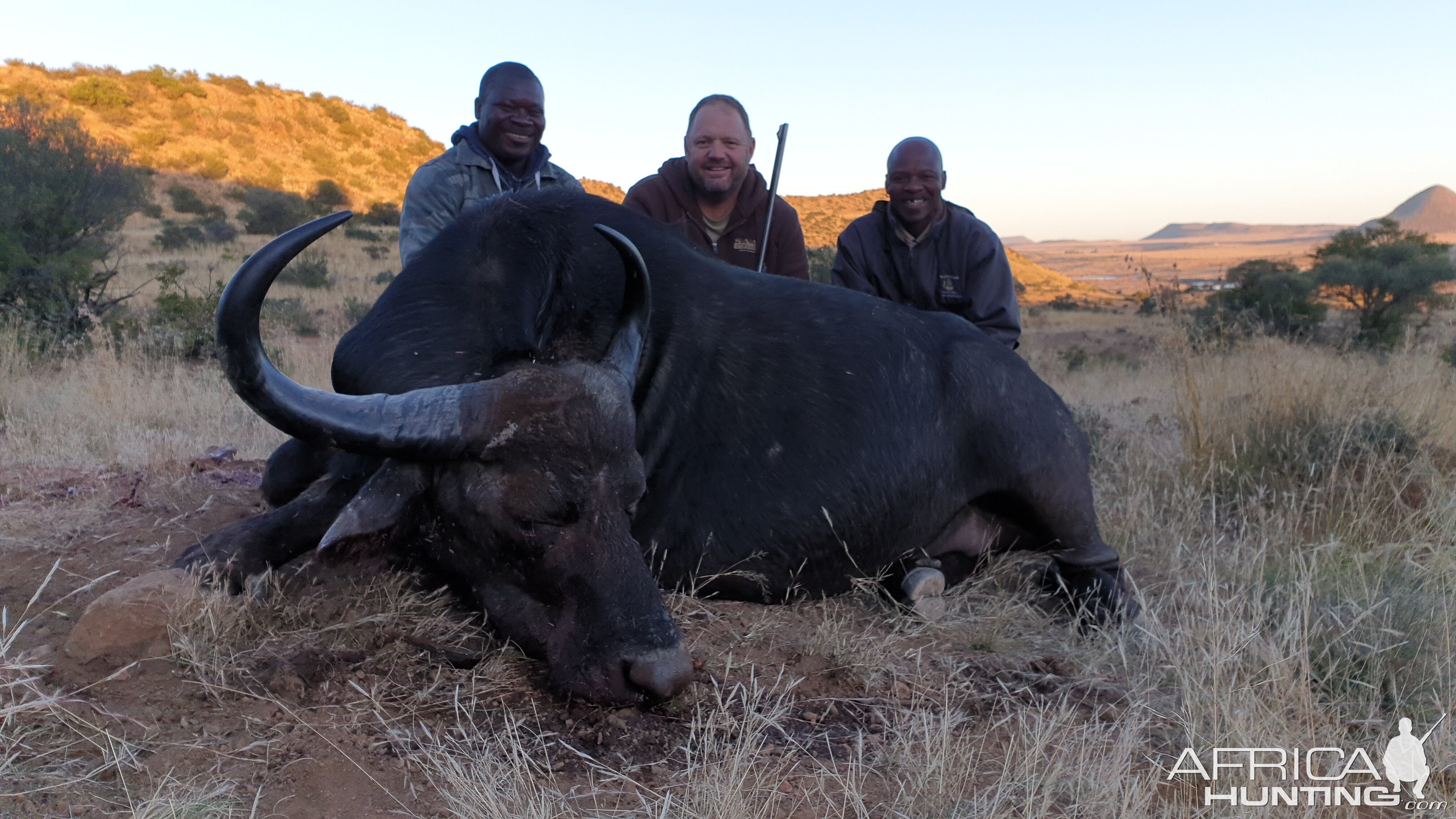 Hunt Cape Buffalo Cow in South Africa