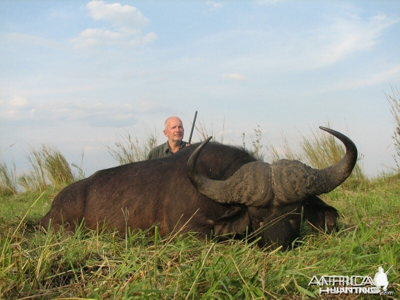 Hunting cape Buffalo Namibia