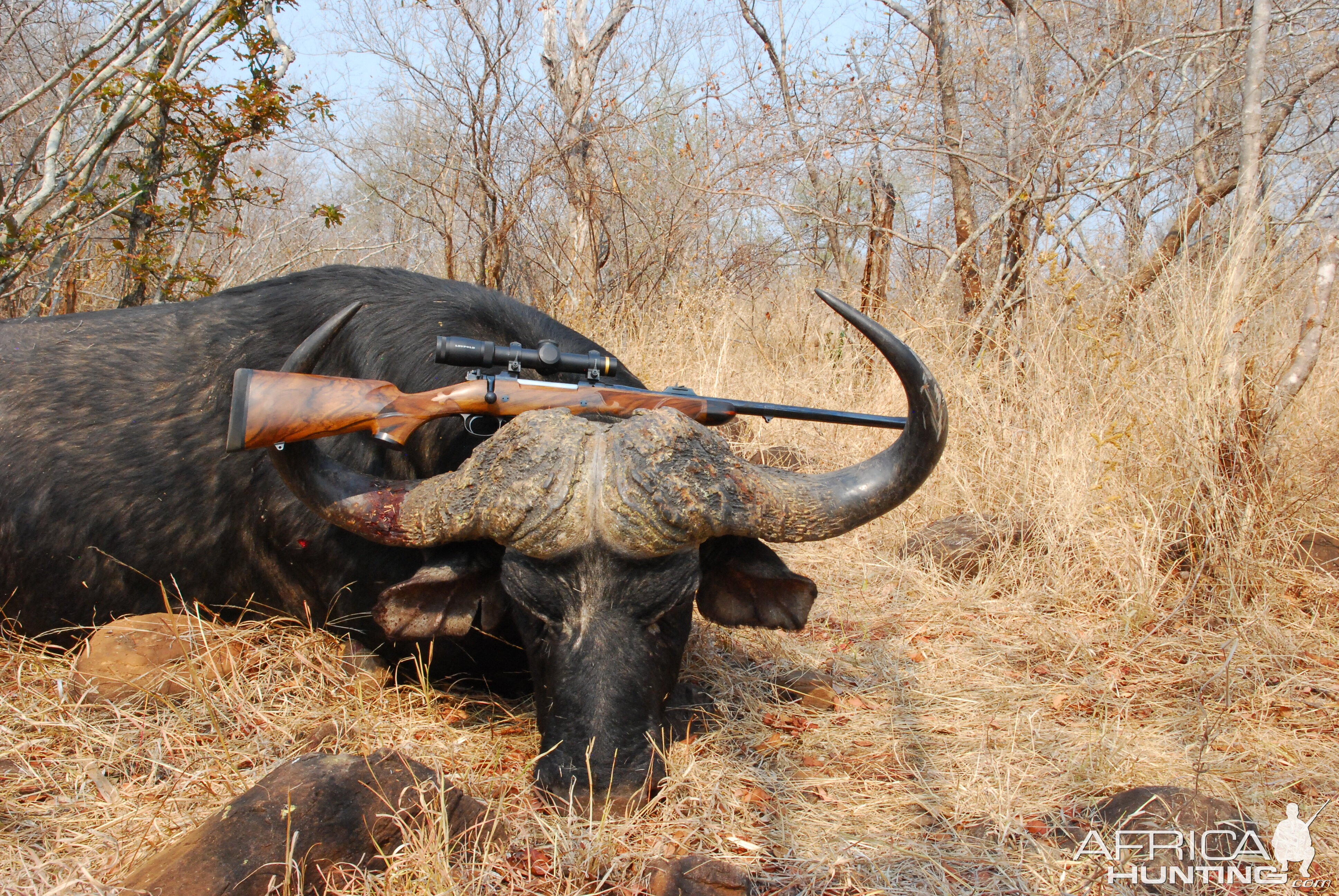 Hunting Cape Buffalo with CZ in  458 Lott Rifle | Hunting