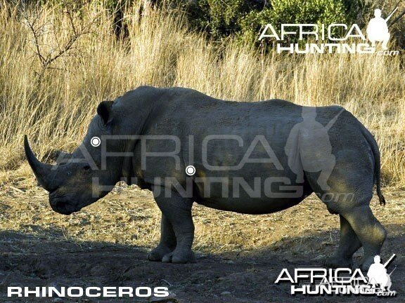 Hunting Rhinoceros Shot Placement