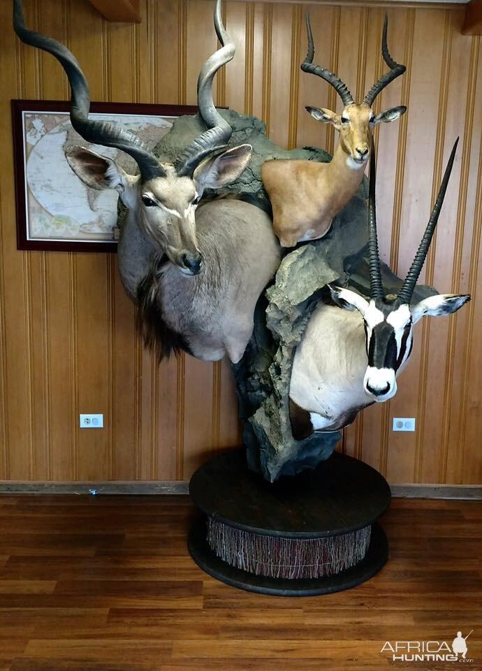 Kudu Impalaamp Gemsbok Shoulder Mount Pedestal Combo