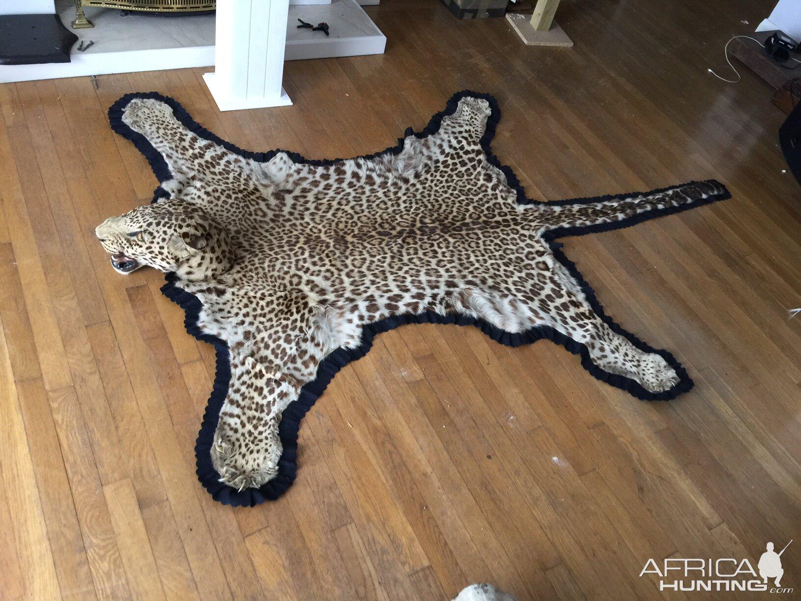 Leopard Skin Rug Taxidermy