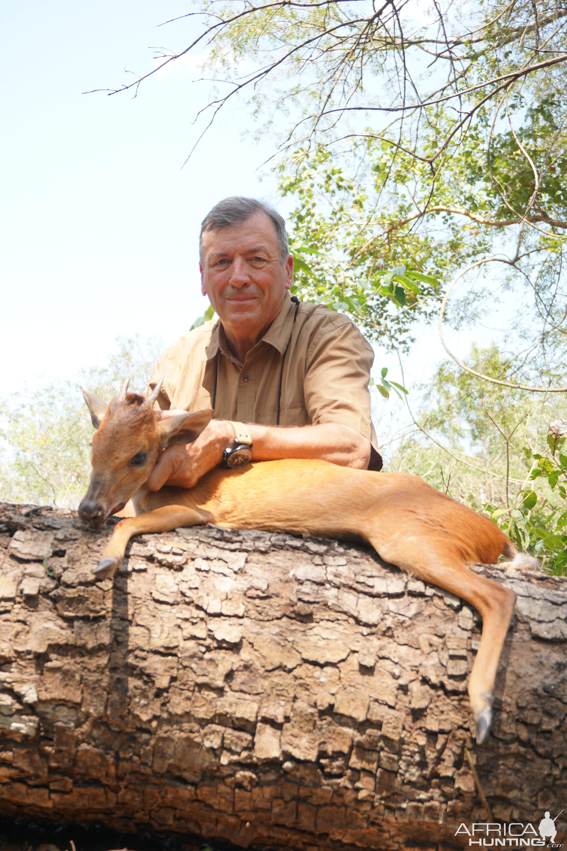 Mozambique Red Duiker
