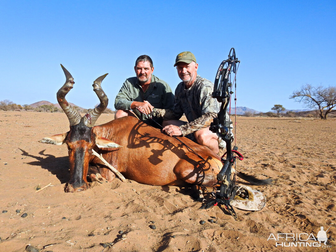 Red Hartebeest Bow Hunting Namibia