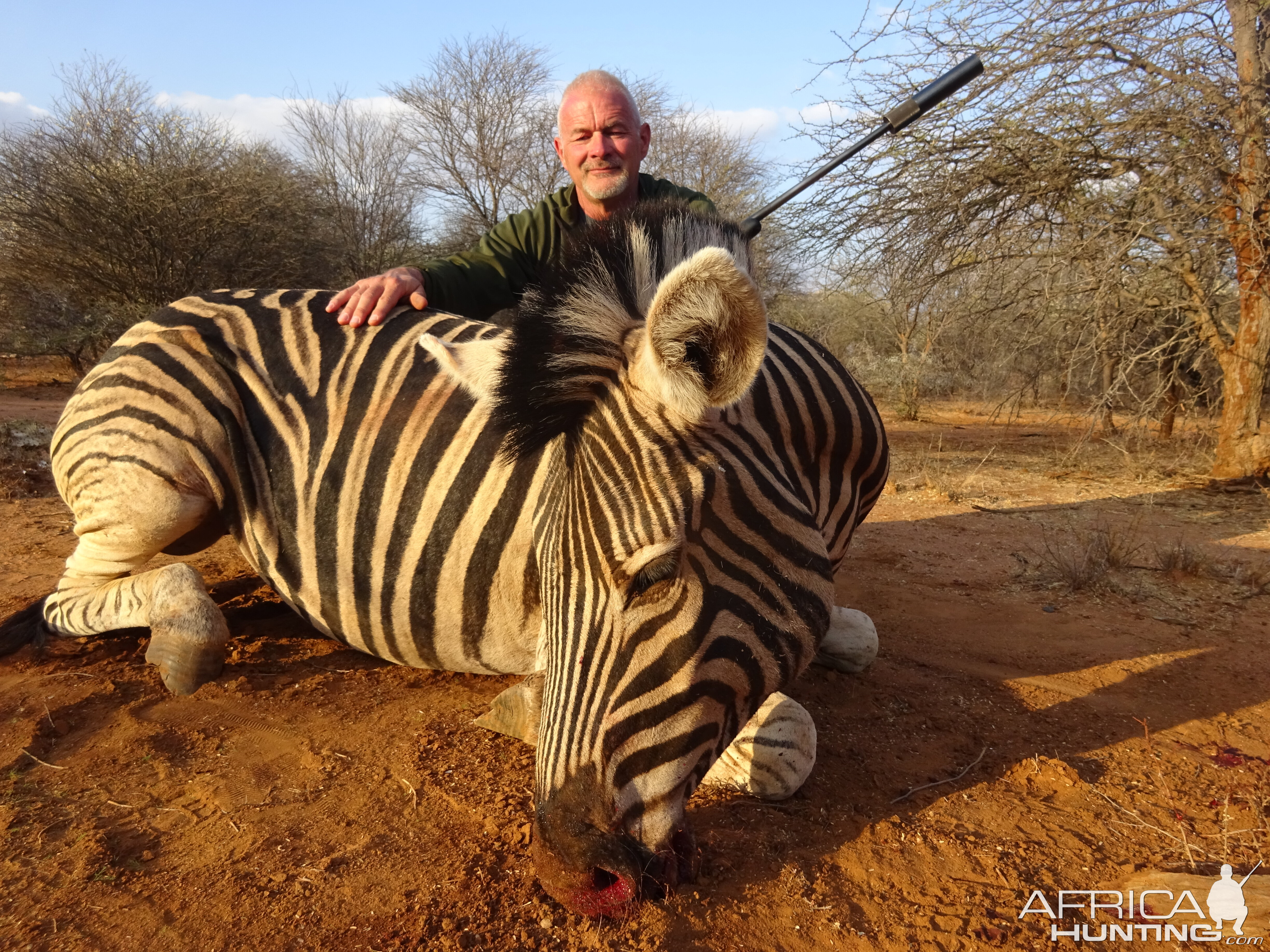 South Africa Burchell's Plain Zebra Bow Hunting