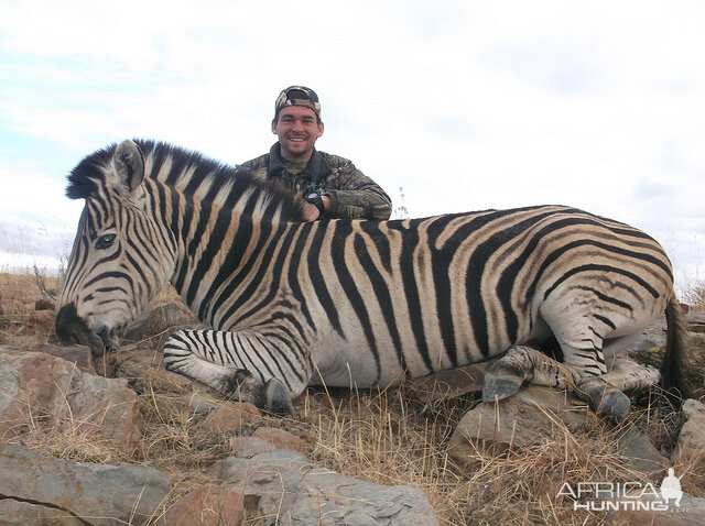 South Africa Burchell's Plain Zebra Hunting