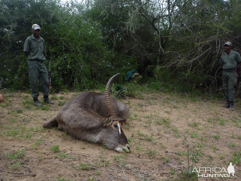 South Africa Hunt Waterbuck