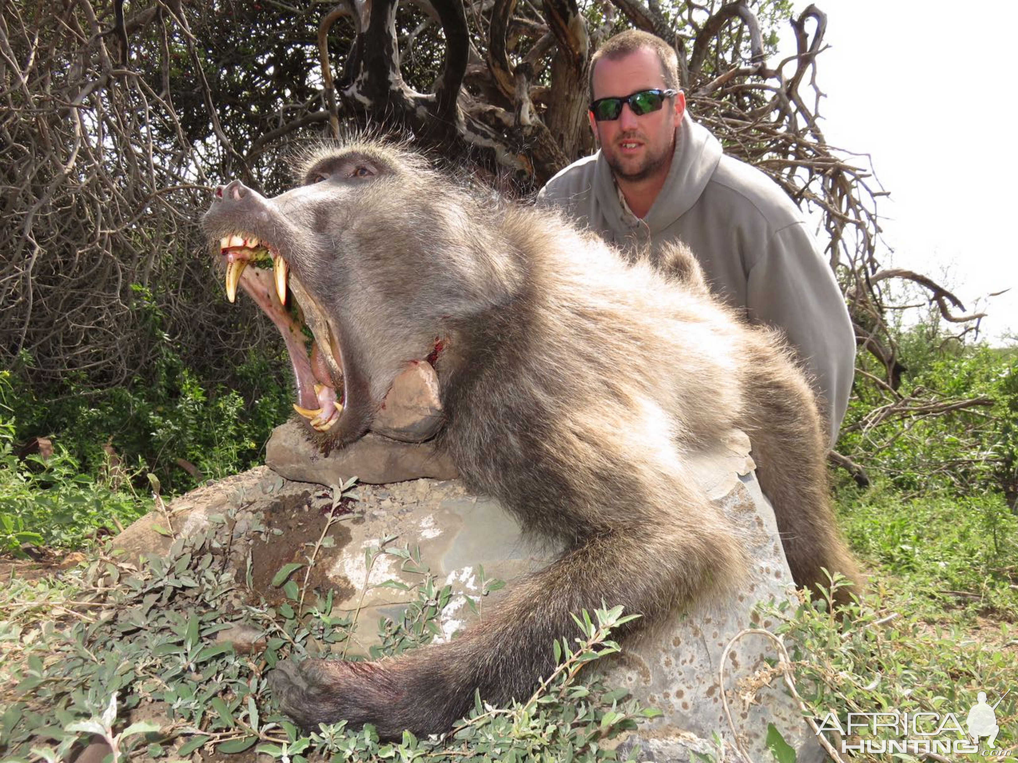 South Africa Hunting Baboon Africahunting Com