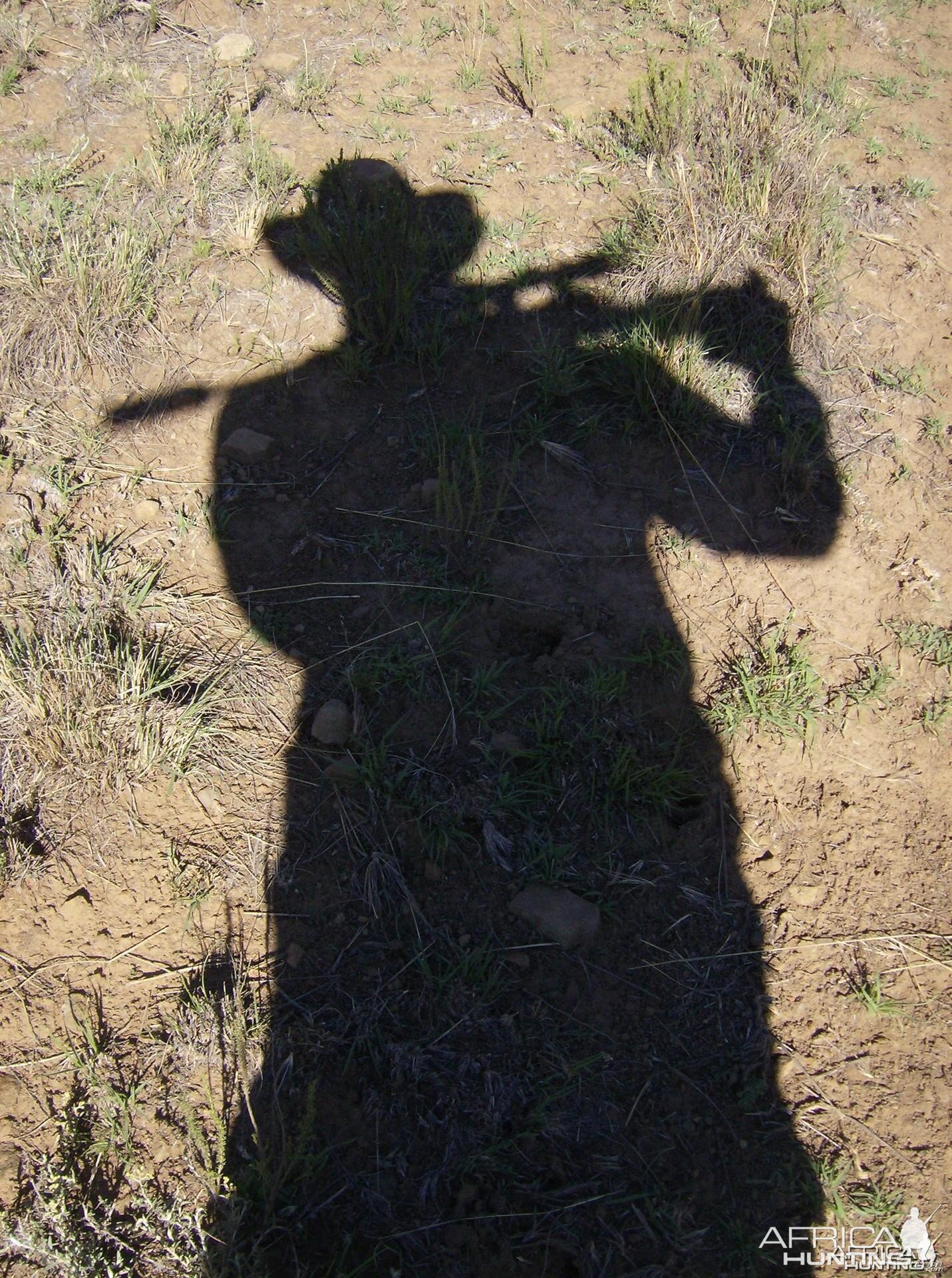 South Africa shadow | Hunting