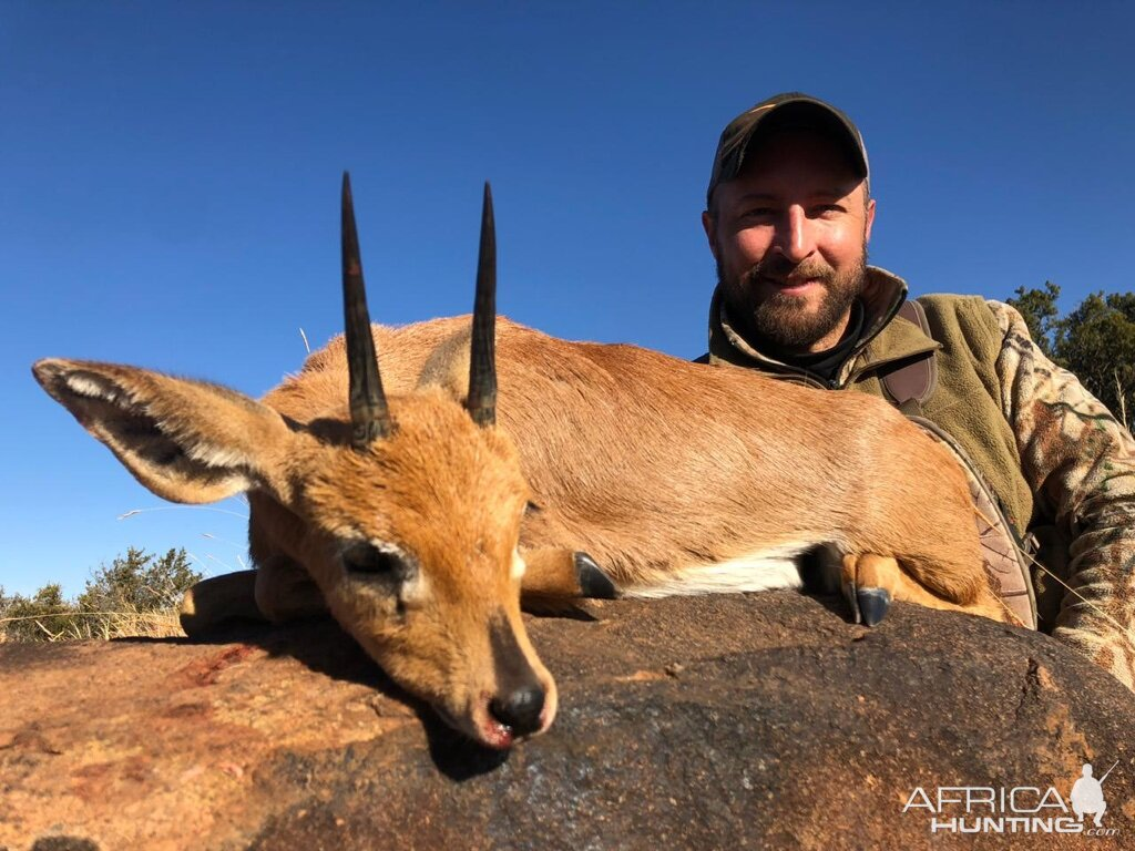 Steenbok Hunting South Africa